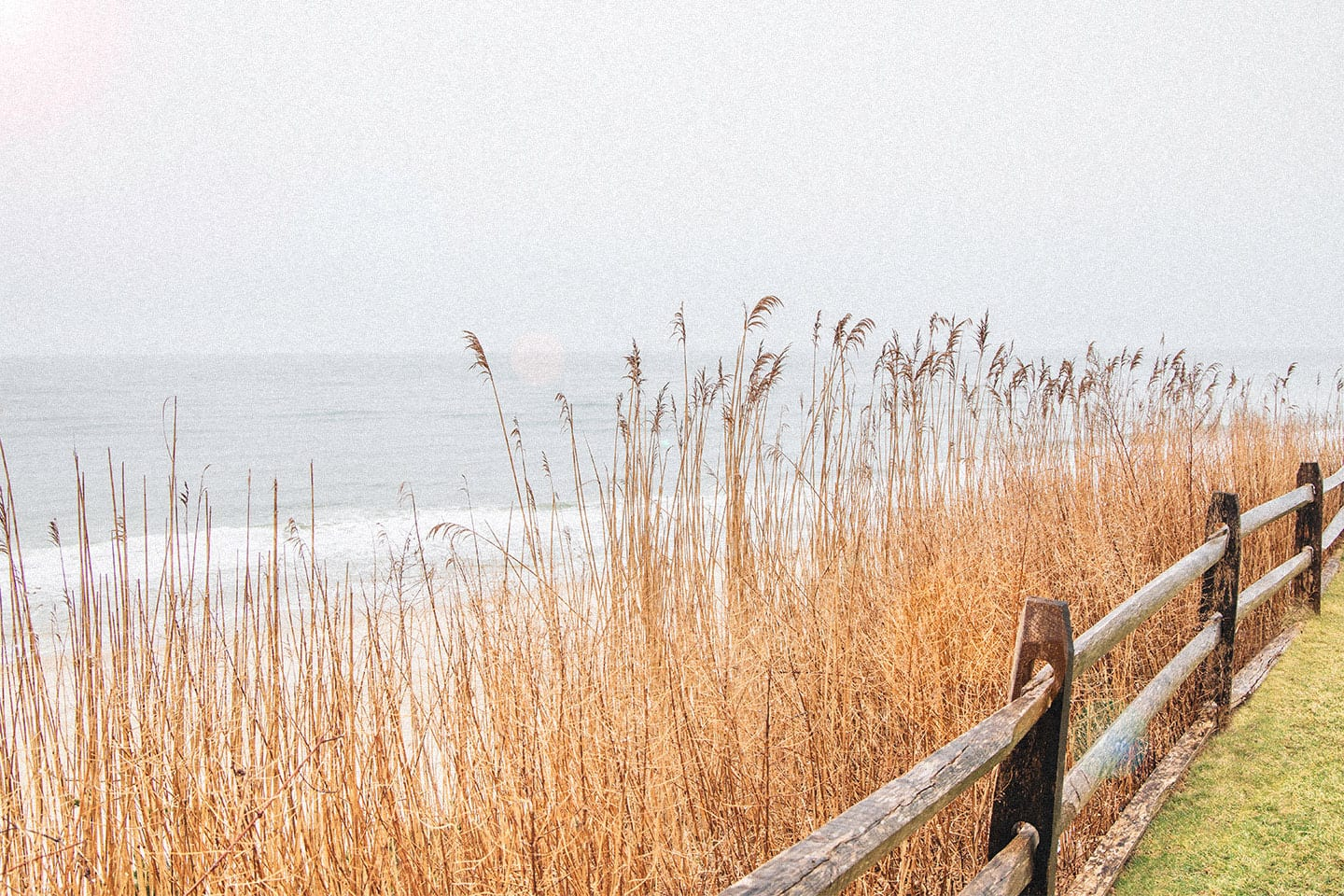 Tall grass foreground with ocean background